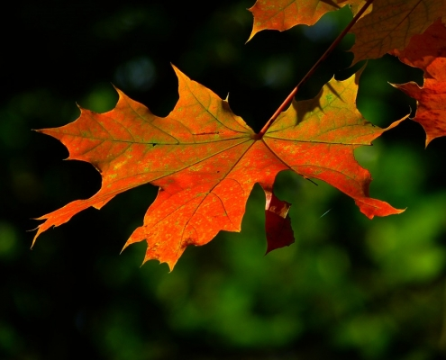 Autumn Leaf | Change of Seasons