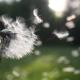 Pollen | Allergies