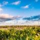 Sustainable Wind Farm
